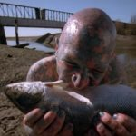 Enigma fish Humbug X Files image